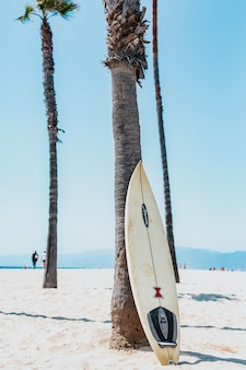 A white and black surfboard leaning on a gray mexican palm tree