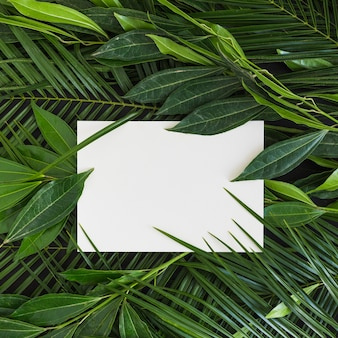 White blank paper on the fresh green leaves