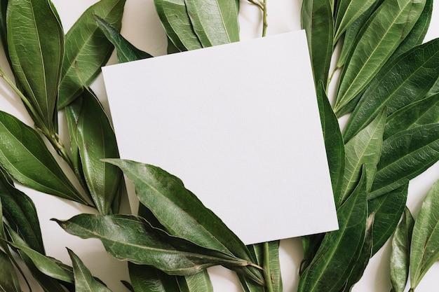 Carta bianca bianca sopra i ramoscelli delle foglie verdi