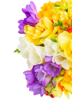 Белые, синие и желтые свежие цветы фрезии и нарциссы на белом фоне