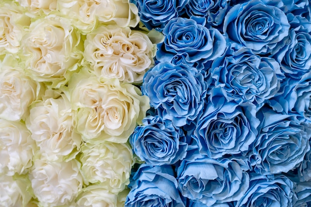 White and blue roses.