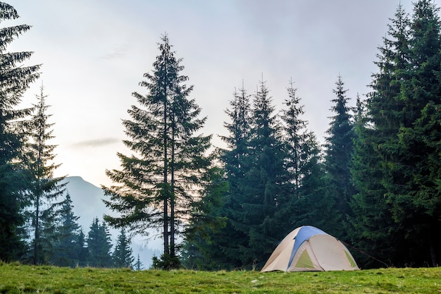 White and blue tourist tent on green meadow between evergreen fir-trees forest with beautiful mountain in distance. tourism, outdoor activities and healthy lifestyle.