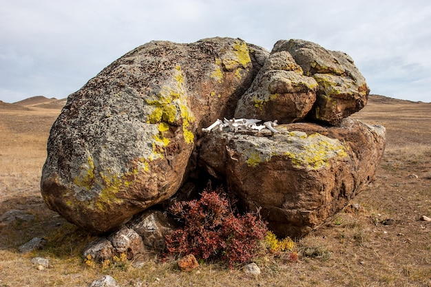 動物の白い骨は、草原の祭壇の形で大きな岩の間にあります