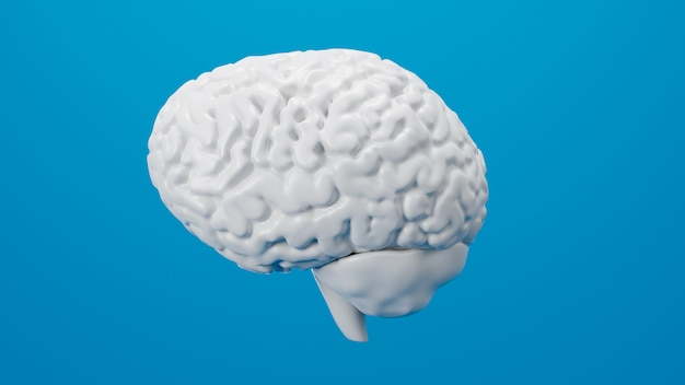 White brain 3d render isolated on background