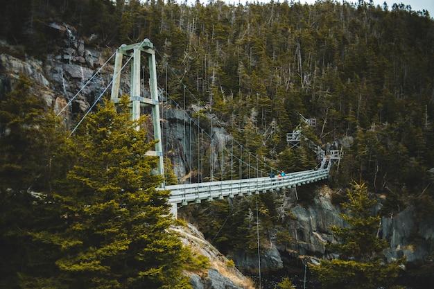 木の間の川に架かる白い橋
