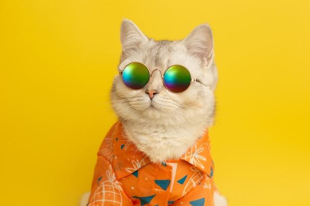 Белая британская кошка носит солнцезащитные очки и рубашку в концепции лета на желтом фоне