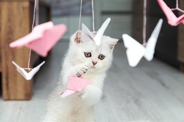 Белый британский котенок смотрит на бумажных бабочек. оригами из бело-розовой бумаги