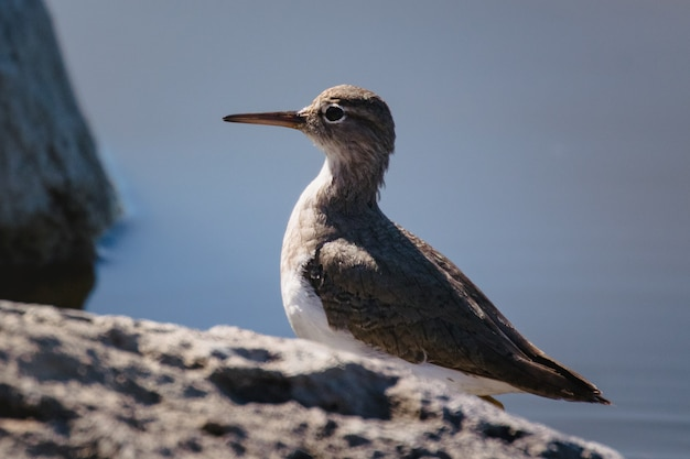 White and brown bird on brown rock during daytime