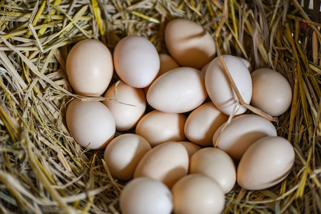 White and brown eggs on basket nest