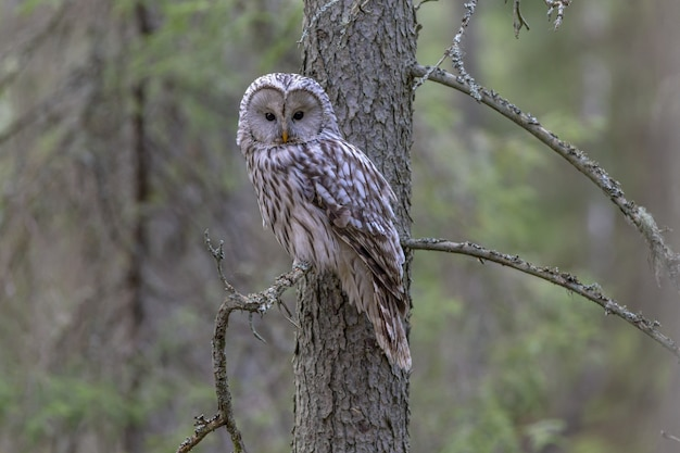 White and brown owl perched on tree branch