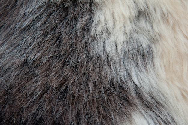 White and brown soft sheep wool texture background background . fluffy fur.