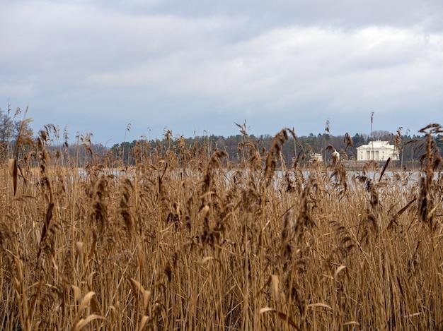 手前に乾いた草がある湖の後ろの白い建物