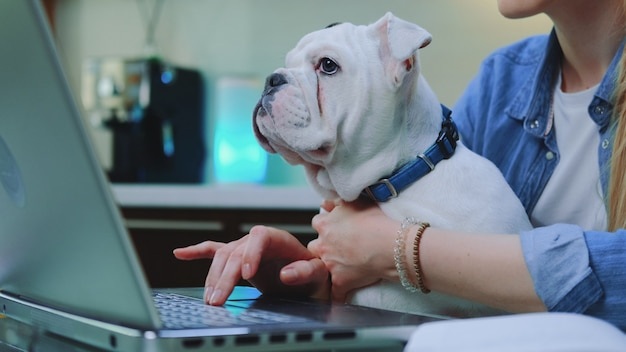 White bulldog sitting on woman's knees while she typing on computer