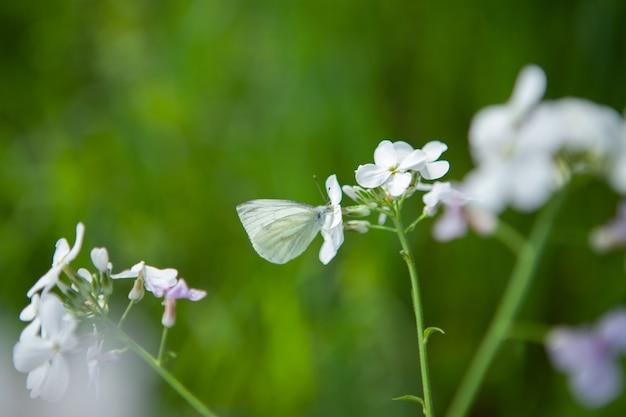 꽃에 흰 나비