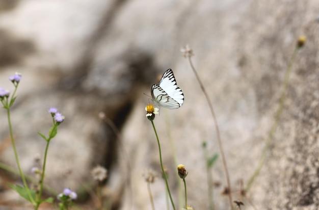 Белая бабочка на цветке.