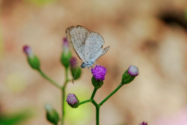 보라색의 꽃에 흰 나비가 피고 있습니다.