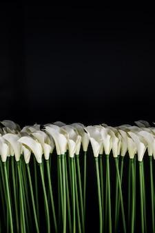 Белые каллы на черном фоне в мягком фокусе