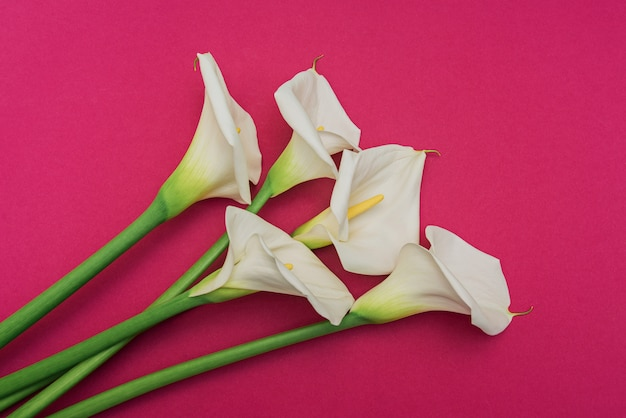 White calla lilly flowers on marsala wall