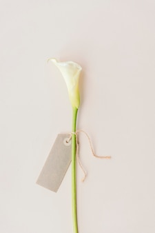 White calla lily with a blank greeting card