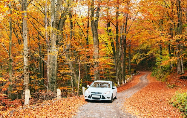 White car on a forest trail.