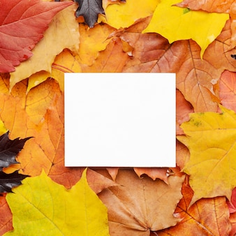 White card for congratulations and inscriptions on colored leaves