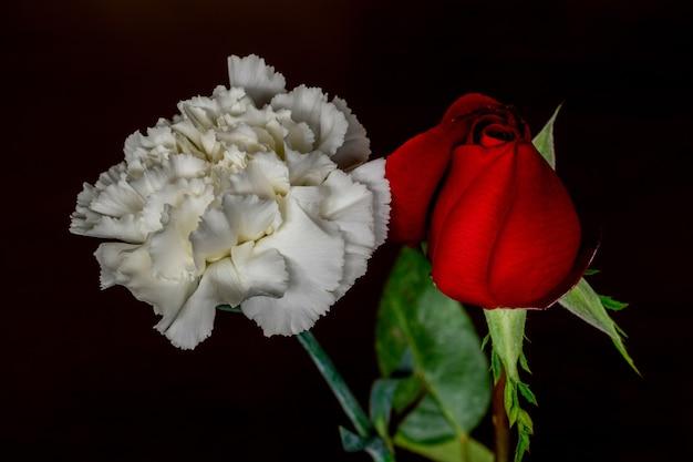 검은 배경에 흰색 카네이션과 분홍색 꽃