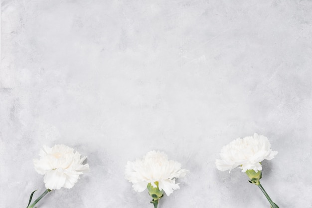 White carnation flowers on grey table