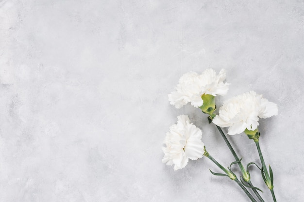 White carnation flowers on table