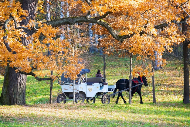 The white carriage with a black horse in the park.