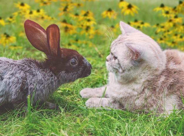 Белый кот и коричневый кролик сидят вместе на зеленой траве в весеннем саду