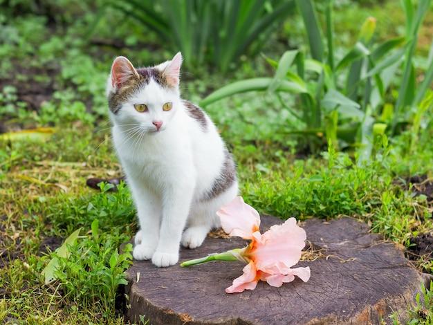 庭の切り株に白い猫とピンクの花のアイリス