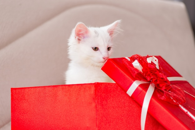 White cat as present in red box