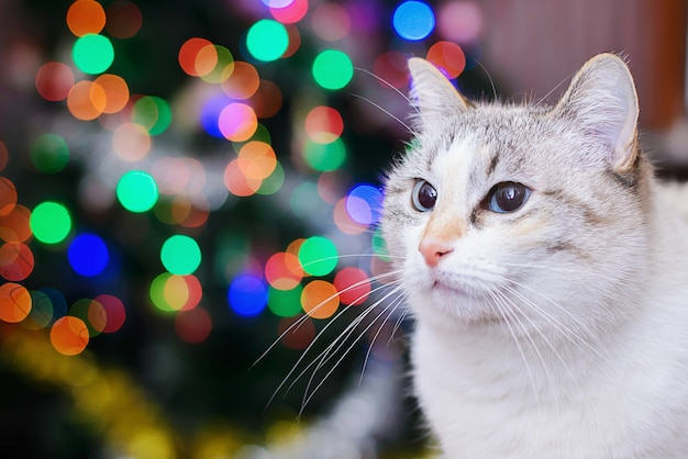 White cat and christmas lights