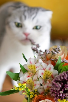 White cat eating bouquet of field flowers on a table cat eating bouquet of flowers