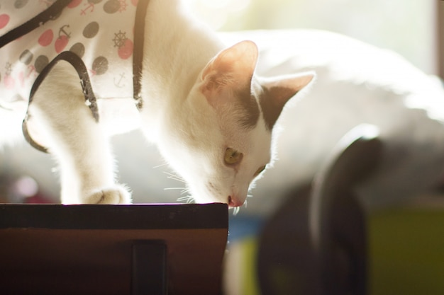 White cat enjoy and standing on the table with beautiful sunlight.