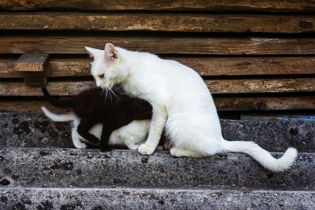 White cat feeds black and white kittens
