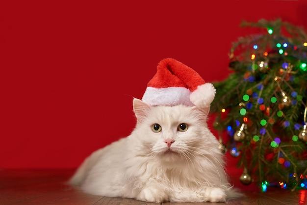 Белый кот в новогодней шапке санта-клаус лежит под елкой, красный фон, для новогодней открытки