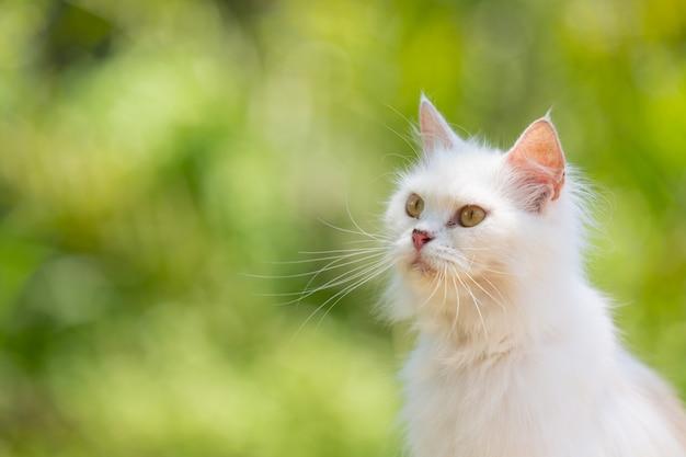Белый кот в саду