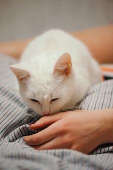 白猫はベッドの上にいます。女性の身体の部分。猫は女の子の手をスニッフィングします。女性の手と脚。