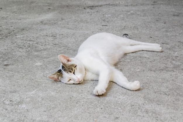 몬테네그로 코토르 시의 돌 포장 도로에 흰 고양이가 누워 있다