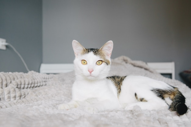 White cat lies on a sofa