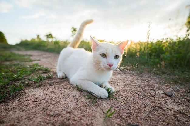 잔디밭에 누워있는 흰 고양이