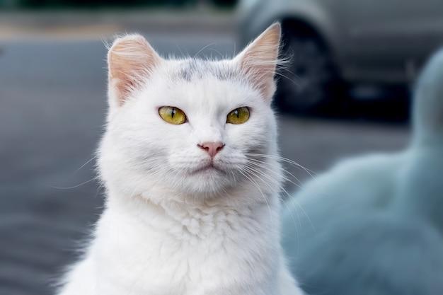 ショーウィンドウの近くの白猫。白猫の肖像画をクローズアップ