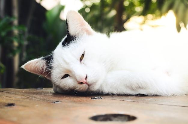 Белый кот на столе в кофейне