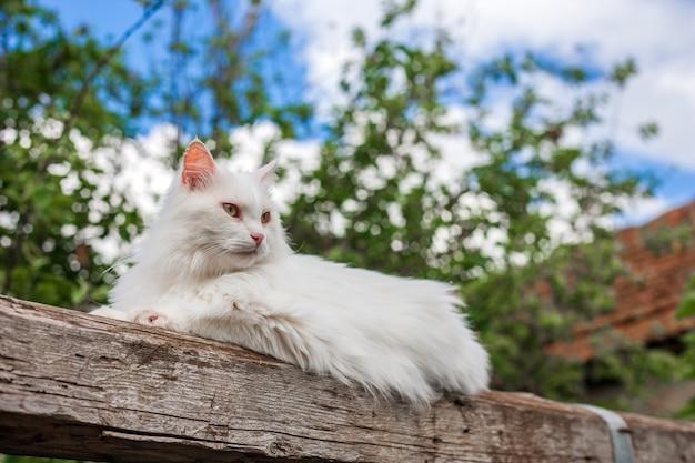 흰 고양이 야외 자연의 자유를 만끽
