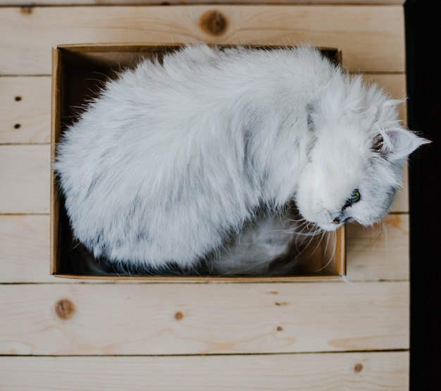 Белая кошка лежит в коробке