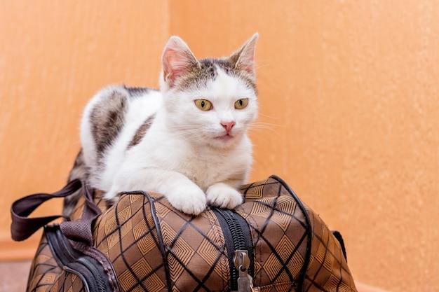 흰 고양이는 가방에 앉는다. 기차역에서 기차를 기다리고 있습니다. 여행 중 가방을 소지 한 승객