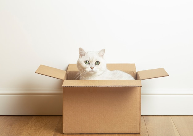 White cat sitting inside a cardboard box against a white wall and wooden floor