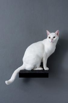 棚の上に座っている白猫