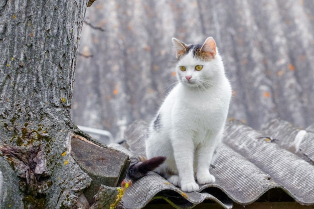 White cat sitting on the roof of a house near a tree